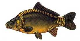 aynalisazan Türkiye'deki balık çeşitleri nelerdir?