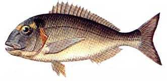cipara Türkiye'deki balık çeşitleri nelerdir?