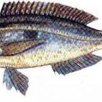 Türkiye'deki balık çeşitleri nelerdir?