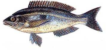 izmarit Türkiye'deki balık çeşitleri nelerdir?