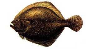 kalkan Türkiye'deki balık çeşitleri nelerdir?