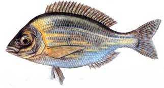 sarigoz Türkiye'deki balık çeşitleri nelerdir?