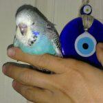 Muhabbetimiz Muhabbet Kuşları