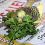 Kuşlar İçin Şifalı Bitkiler