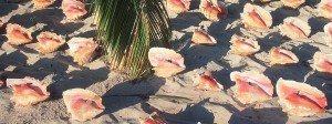 karayip türk adası Karayiplerde TÜRK Adında Ada