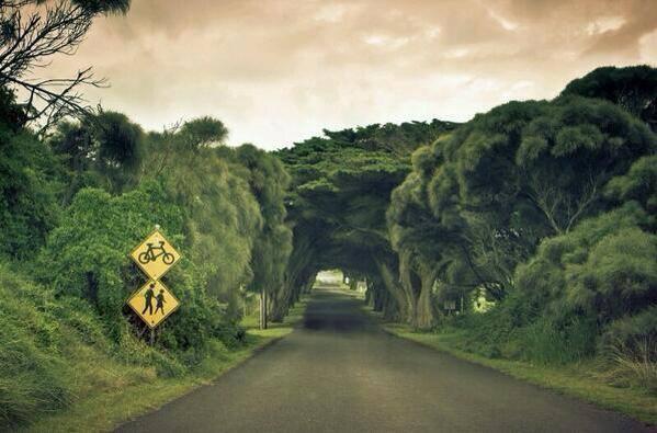bir-bisiklet-yaya-yolu-manzarasi-avusturalya