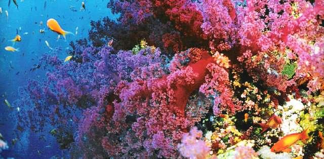 buyuk-merca-kayaliklari-avusturalya-1