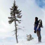 Dünyanın En Yaşlı Ağacı 9500 Yaşında!