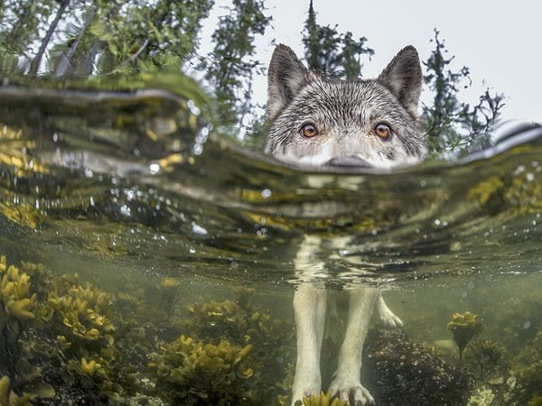 sea-wolf-water_92236_600x450