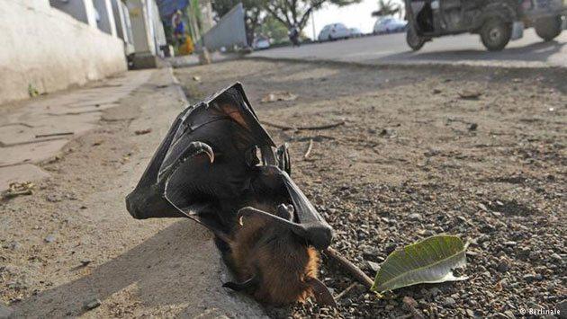 yarasa-ölümü
