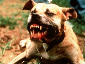 -köpek- Yeryüzünde İnsan Ölümüne En Çok Sebep Olan Canlılar ( Sıralamaya Dikkat!! )