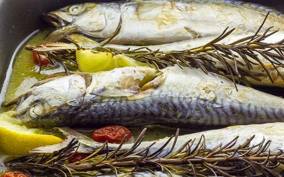 uskumru Ekim Ayında Hangi Balık Çeşidini Yemeliyiz!