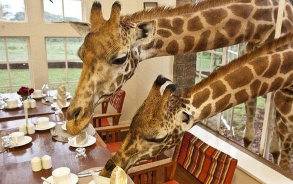 Hayvanseverlerin Bayılacağı Birbirinden Muhteşem Oteller
