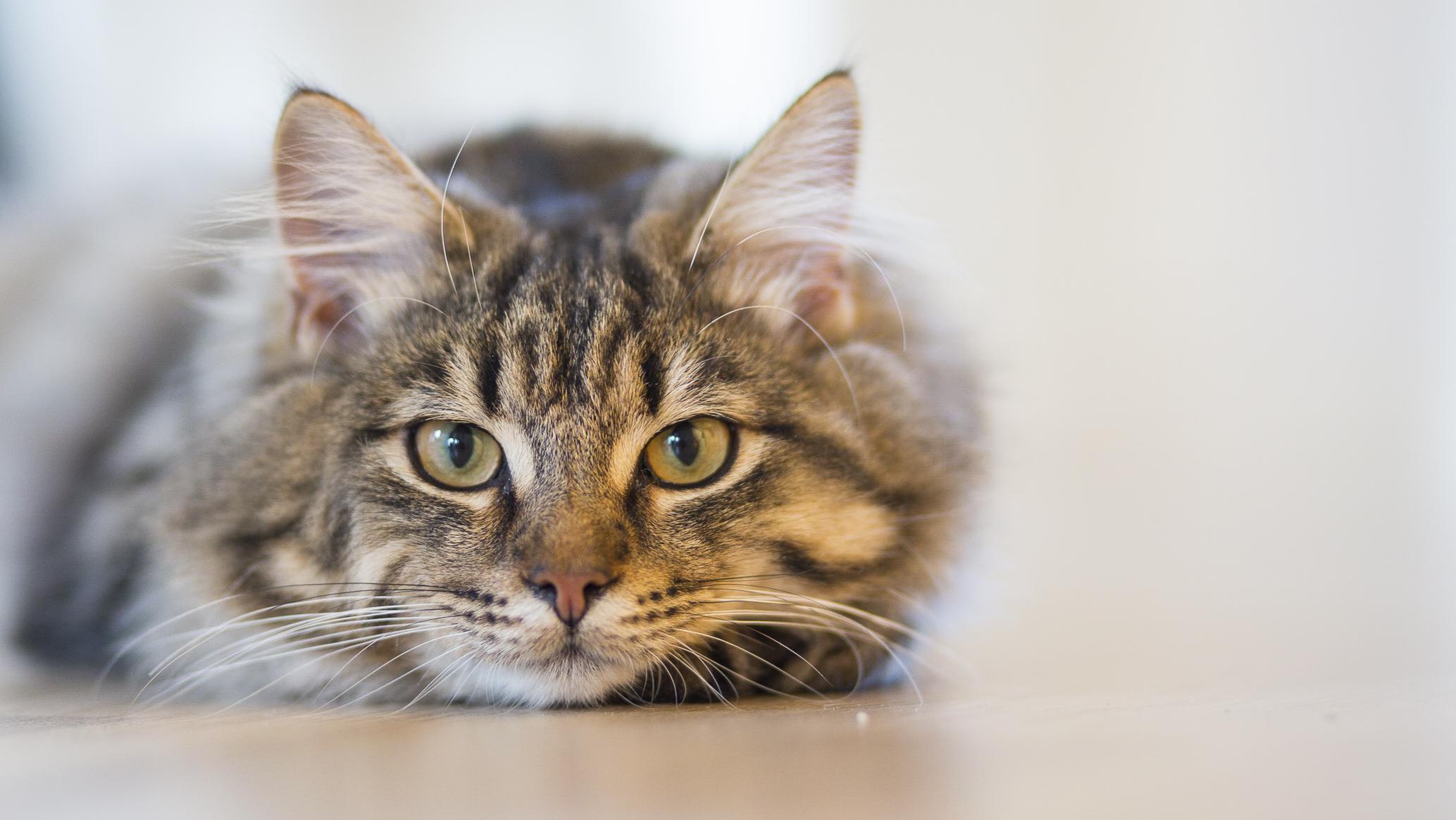cat deterrent spikes