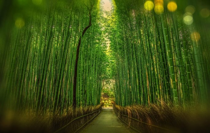 Bambu Nedir ? Nerelerde Kullanılır ?